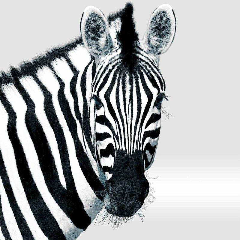 20x Design decoratie servetten 33 x 33 cm zwart/wit met Zebra print