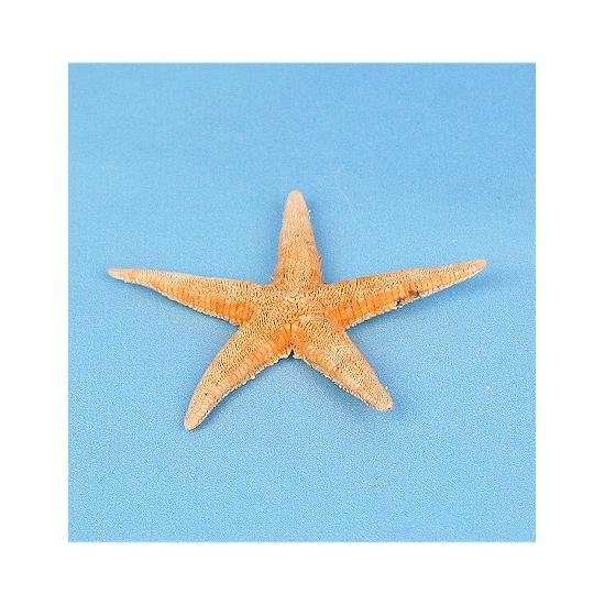 20x stuks Strand/Zee dieren zeesterren Archaster 7 cm