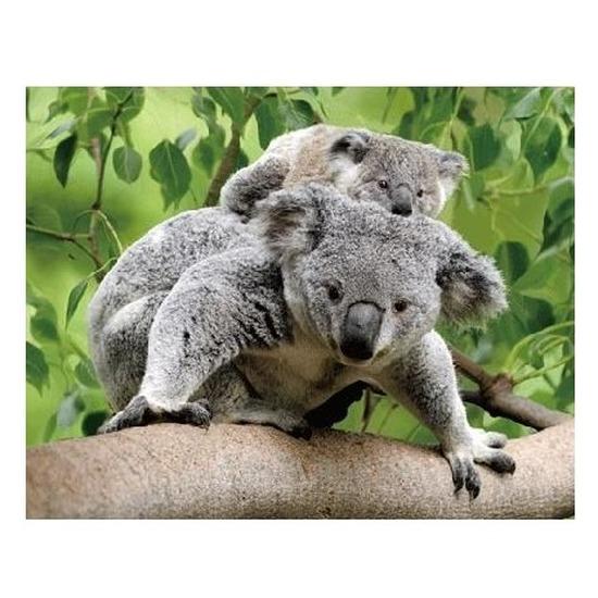 3D koelkast magneetje koalaberen