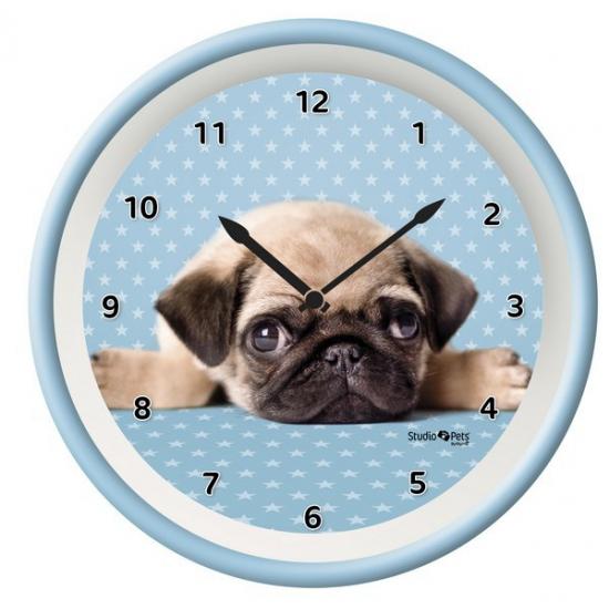 Blauwe klok Mopshond