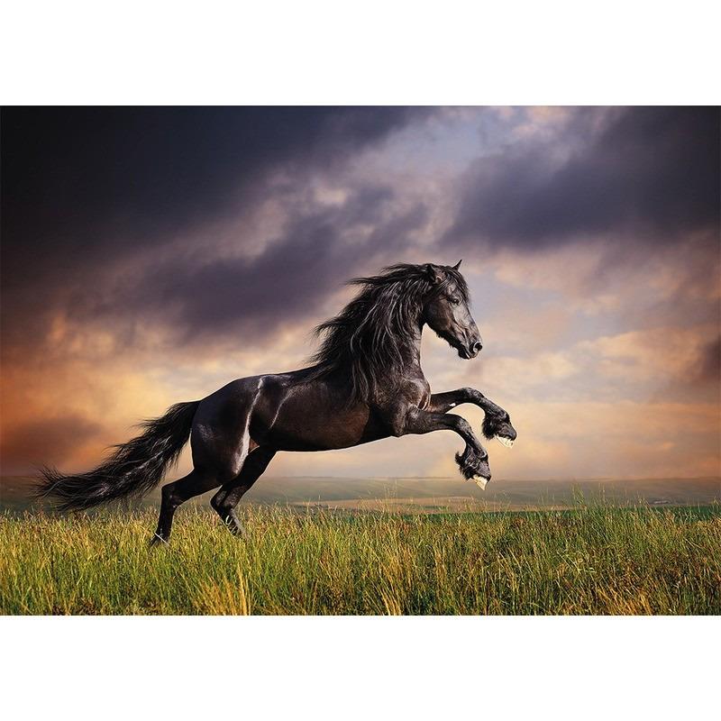 Dieren kinderkamer poster galopperende zwarte hengst / paard 84 x 59 cm