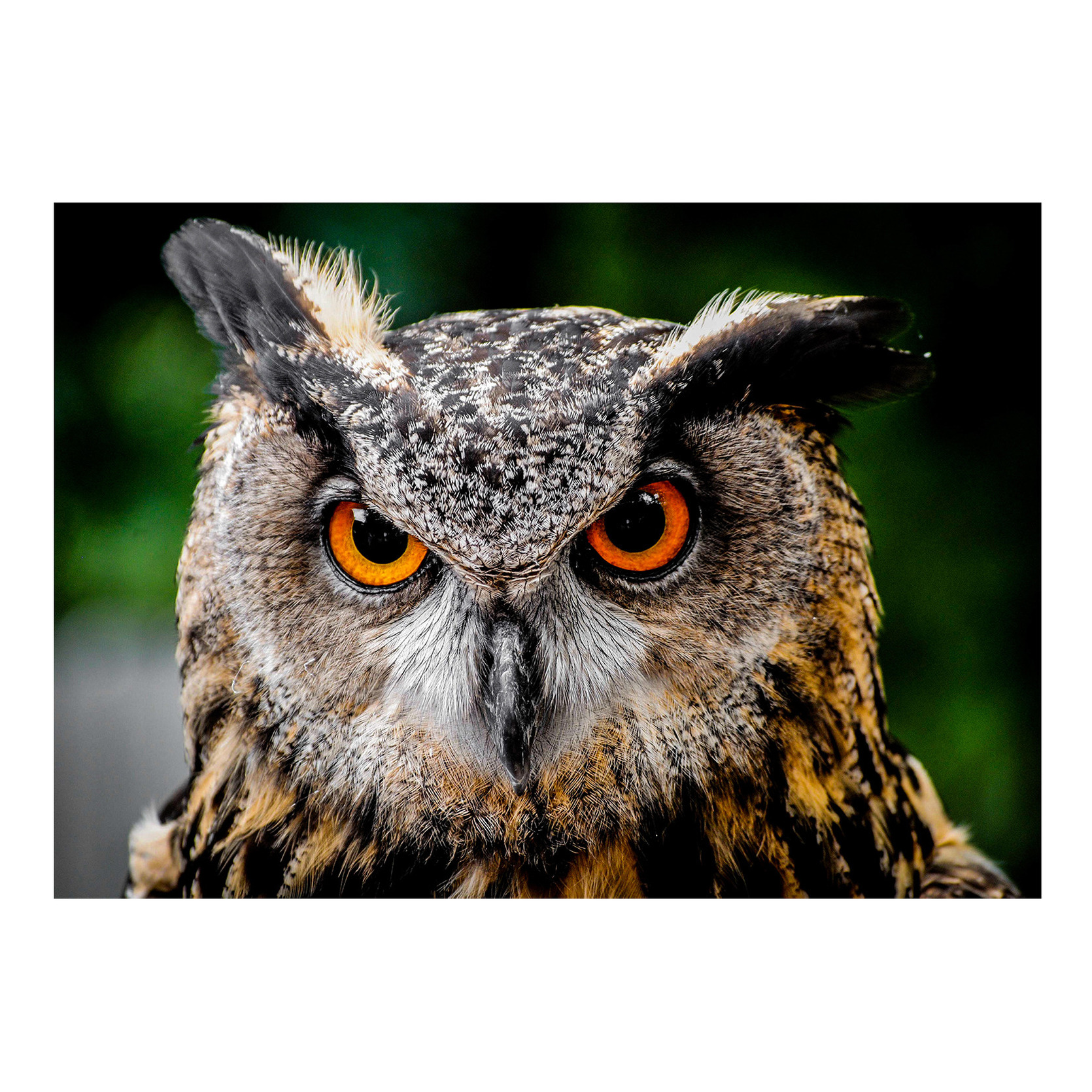 Dieren kinderkamer poster Oehoe uil vogel 84 x 59 cm