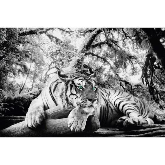 Dierenposter tijger 53 x 158 cm