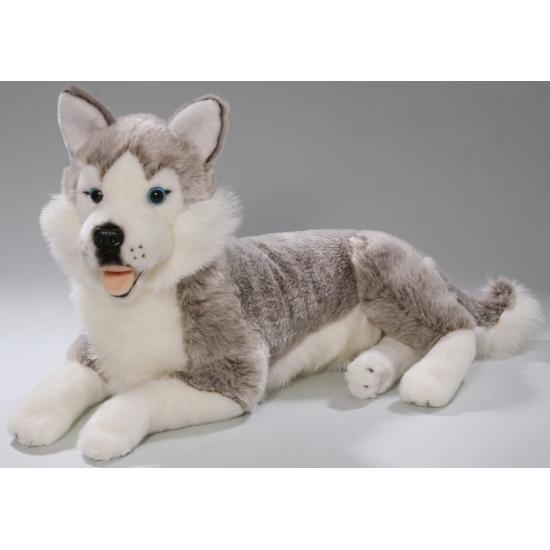 Husky hond knuffeldier/knuffelbeest van 42 cm