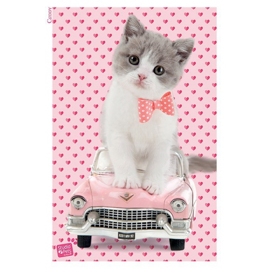 Afbeelding Kitten maxi poster 61x91.5 door Animals Giftshop
