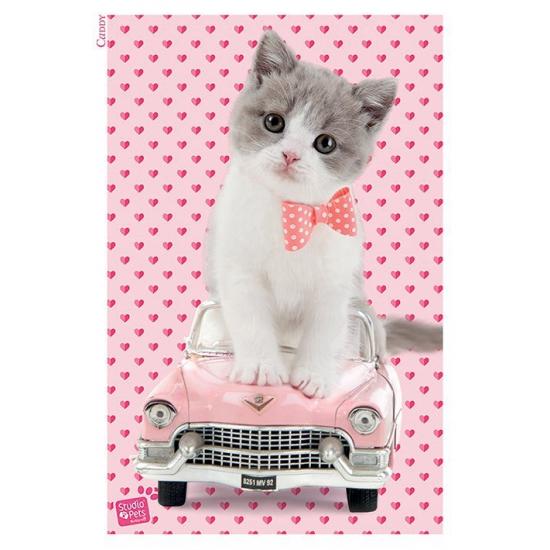 Kitten maxi poster 61x91.5