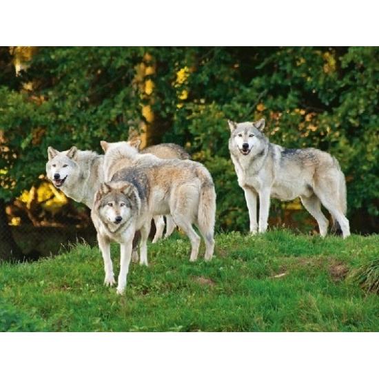 Placemat wolven 3D 40 cm