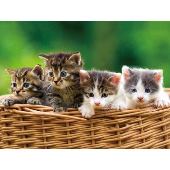 Afbeelding Placemats poezen/kittens 3D effect 30 x 40 cm door Animals Giftshop