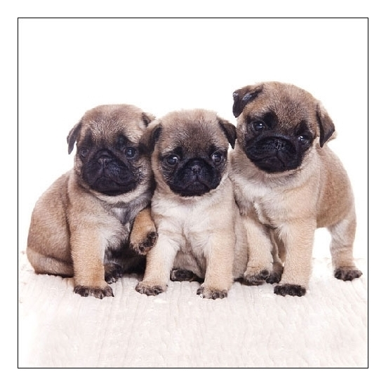 Servetten puppy 3-laags 20 stuks