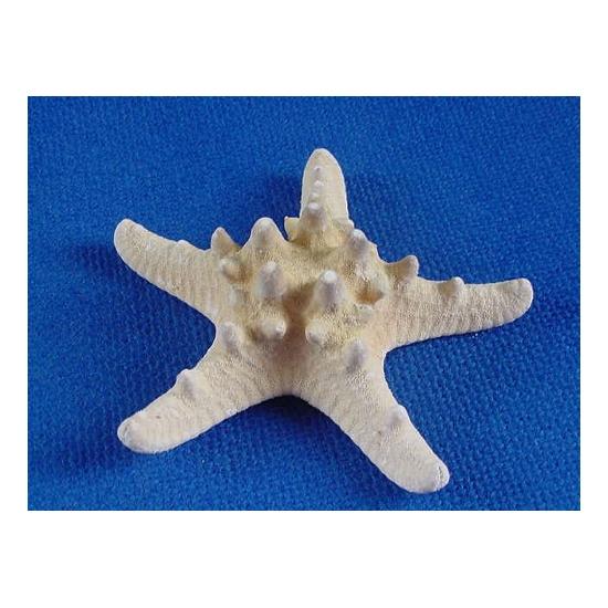 Setje van 10x Strand zeesterren Asteroidea 8 cm