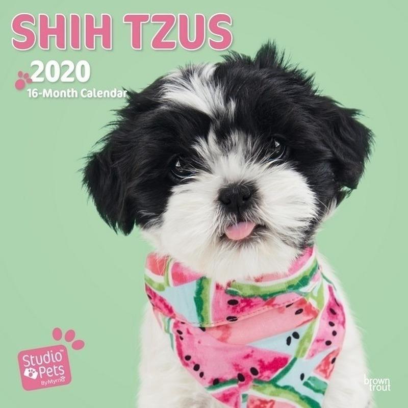 Shih Tzu hondjes 2020 dieren wandkalender