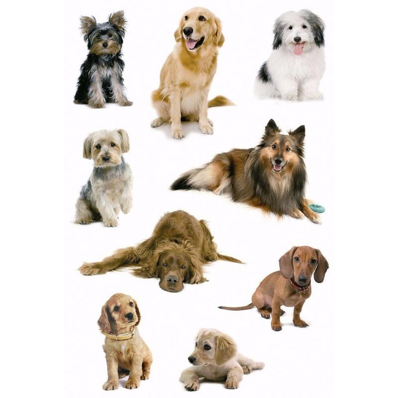 Stickers diverse honden 3 vellen