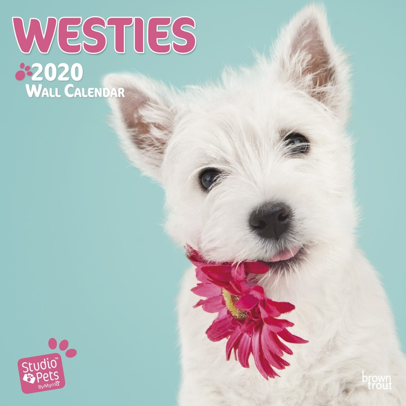 Westie hondje 2020 dieren wandkalender