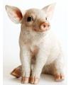 Tuinbeeldje varkens beeldje 24 cm