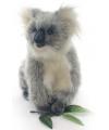 Koala knuffeldier 23 cm