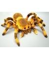 Knuffeldier spin 27 cm