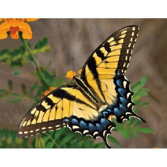 3D koelkast magneetje met gele vlinder