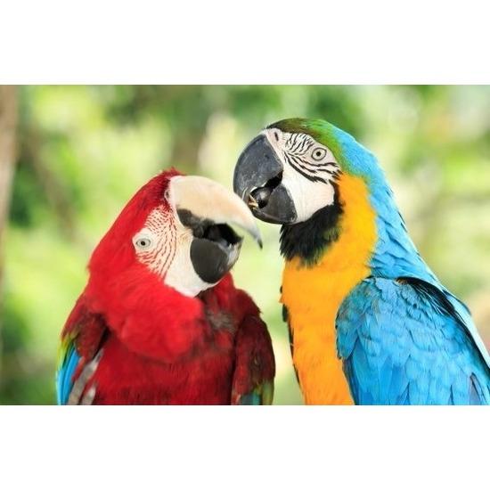 3D koelkast magneetje met papegaaien