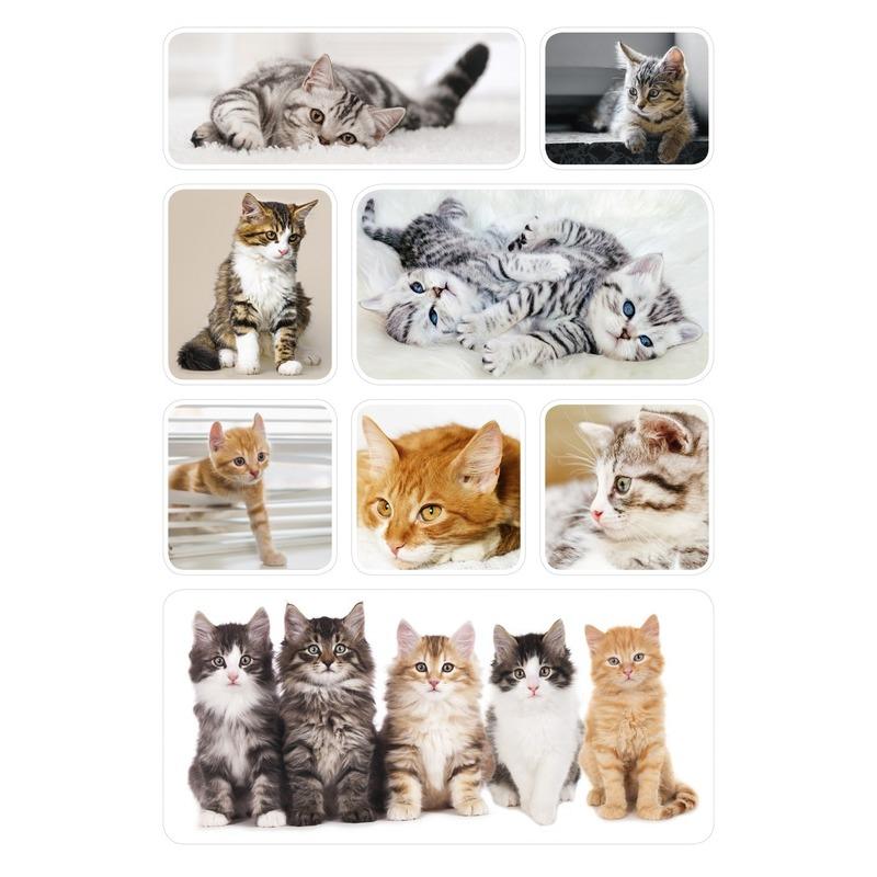 3x Poes/kitten stickervellen met 8 stickers