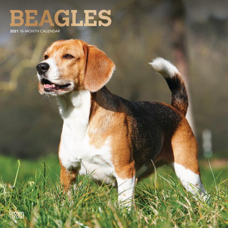 Beagle hond 2021 dieren wandkalender