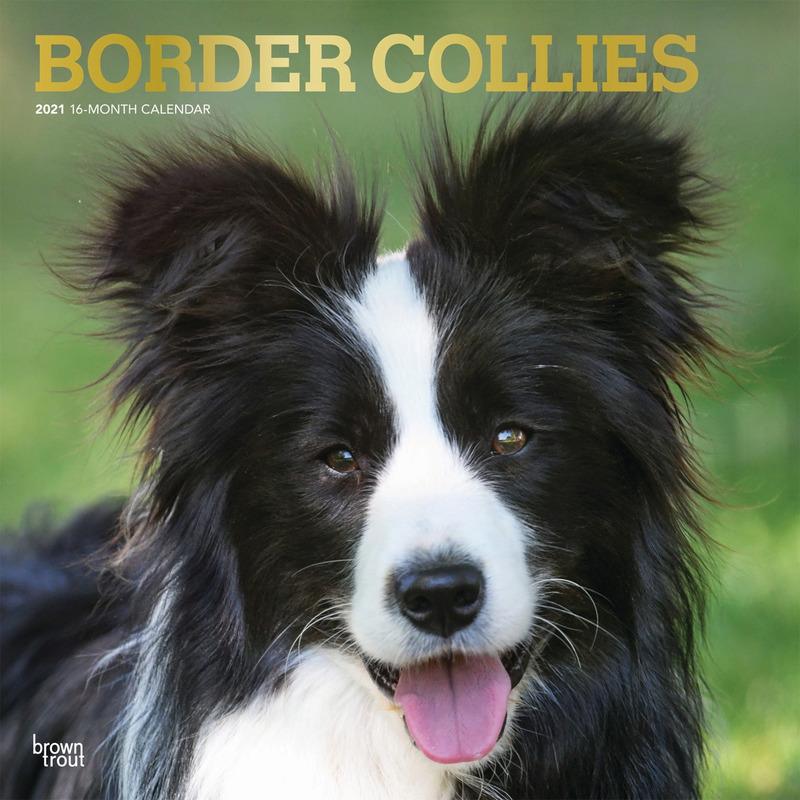 Border Collie hond 2021 dieren wandkalender