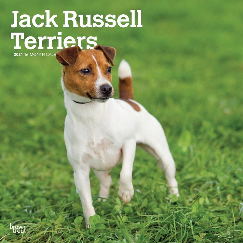 Afbeelding Jack Russel hondjes 2021 dieren wandkalender door Animals Giftshop