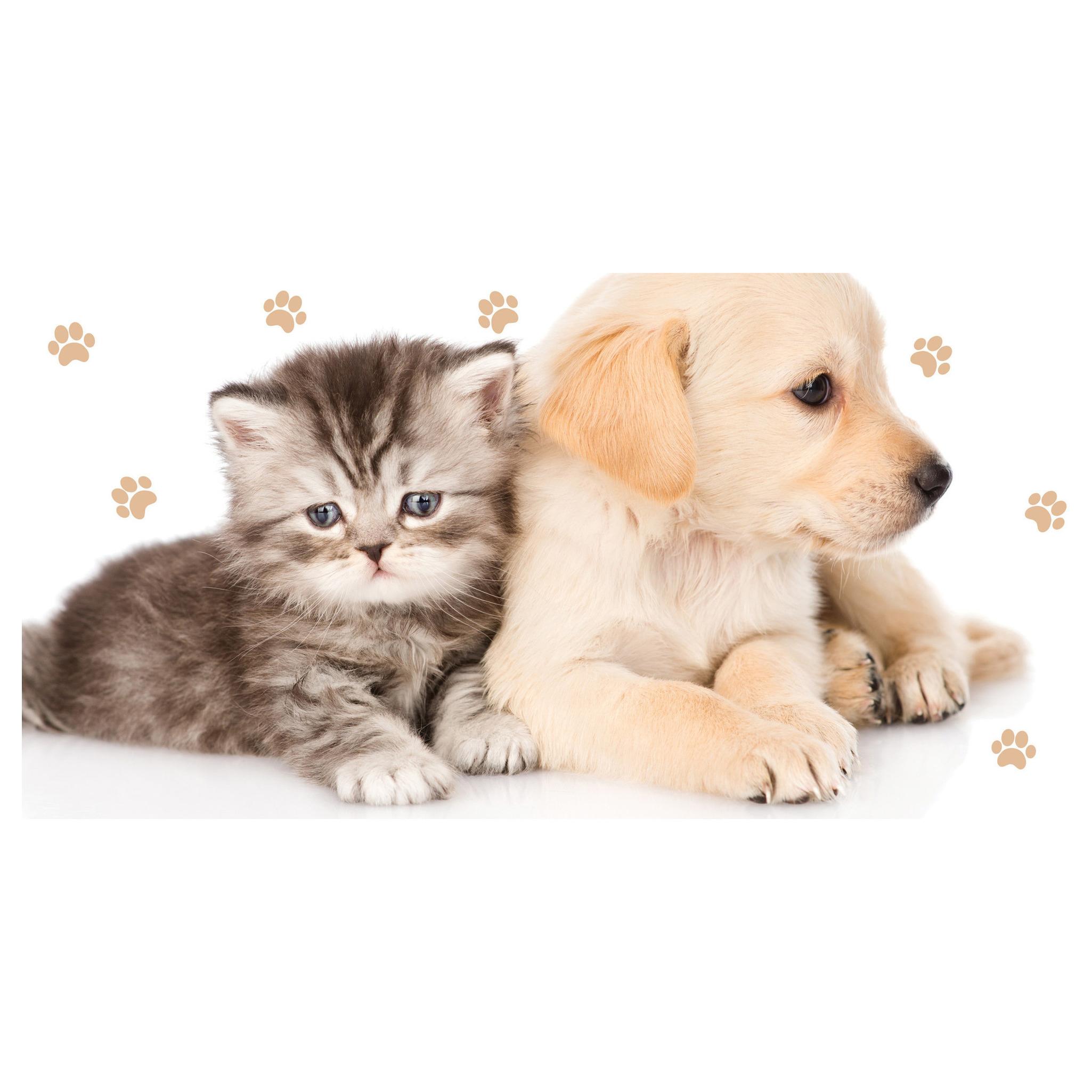 Kitten/puppy badhanddoek wit 70 x 140 cm
