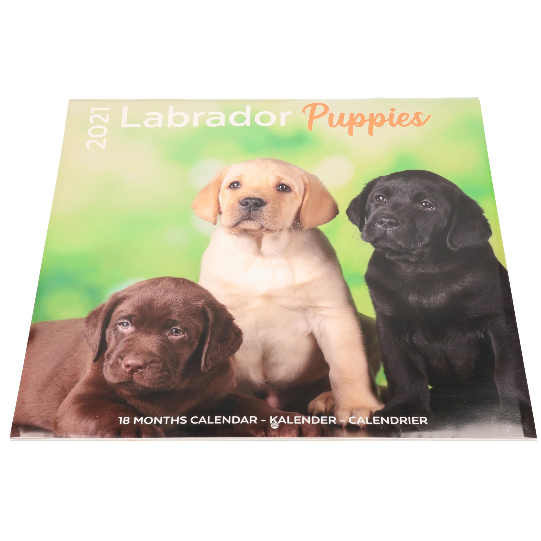 Afbeelding Labrador puppies puppies Retriever hond 2021 dieren wandkalender door Animals Giftshop