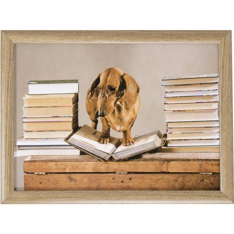 Laptray/schoottafel Teckels honden print 43 x 33 cm