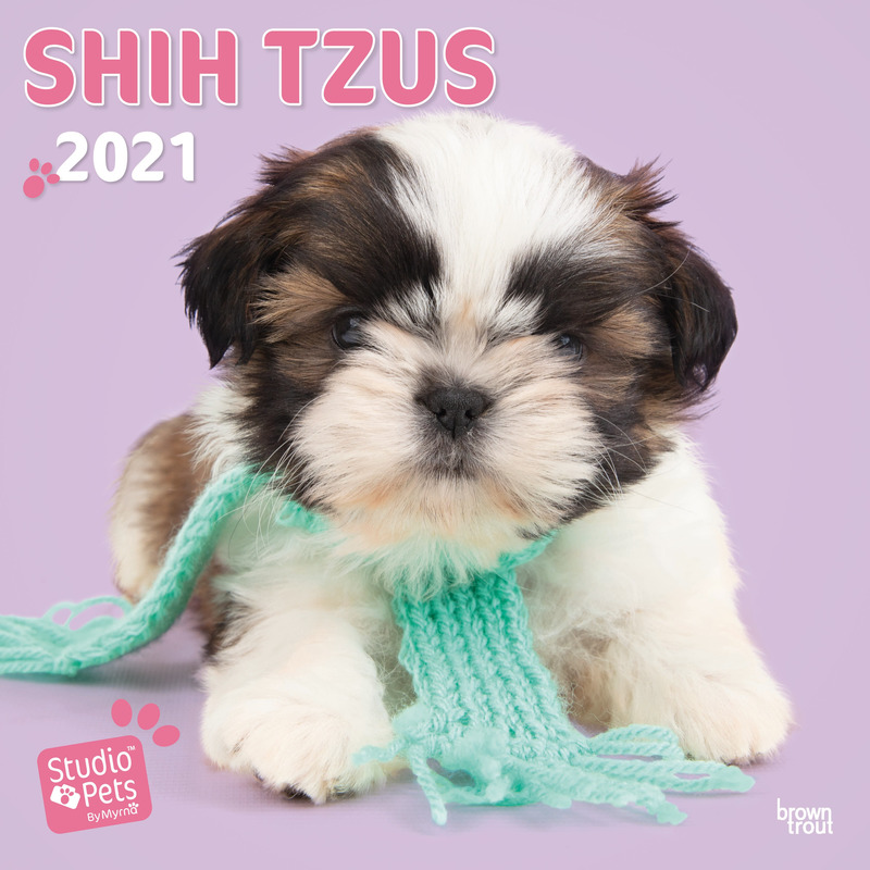 Shih Tzu hondjes 2021 dieren wandkalender