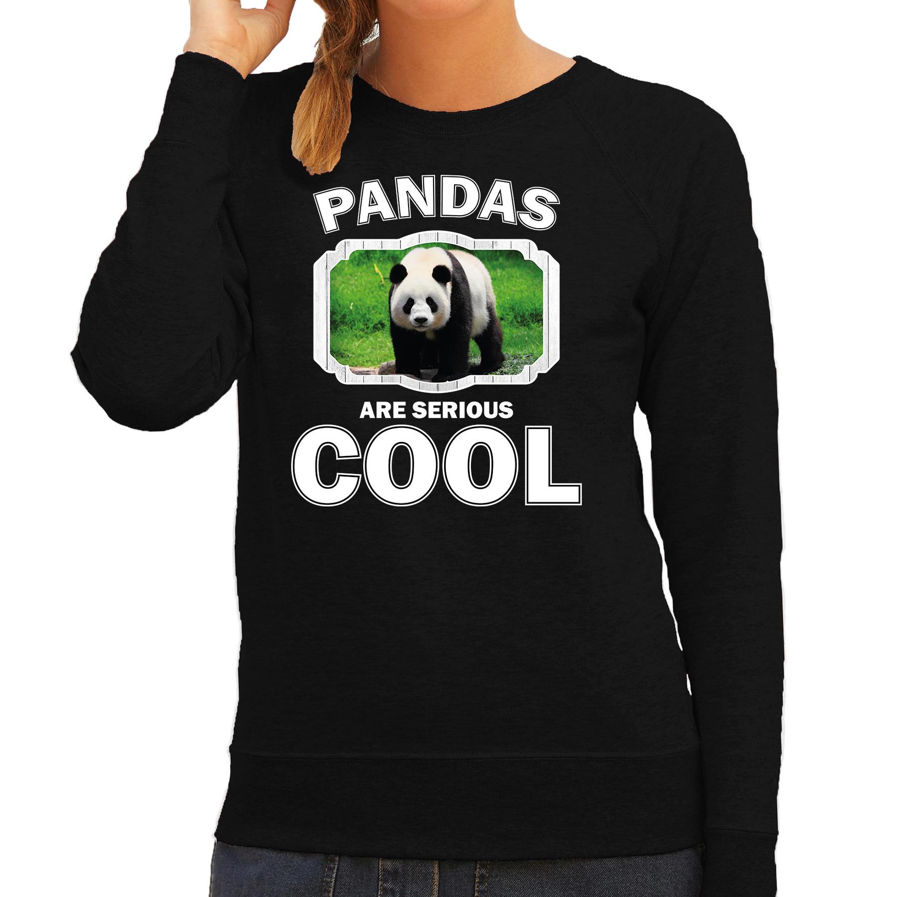 Sweater pandas are serious cool zwart dames - pandaberen/ grote panda trui