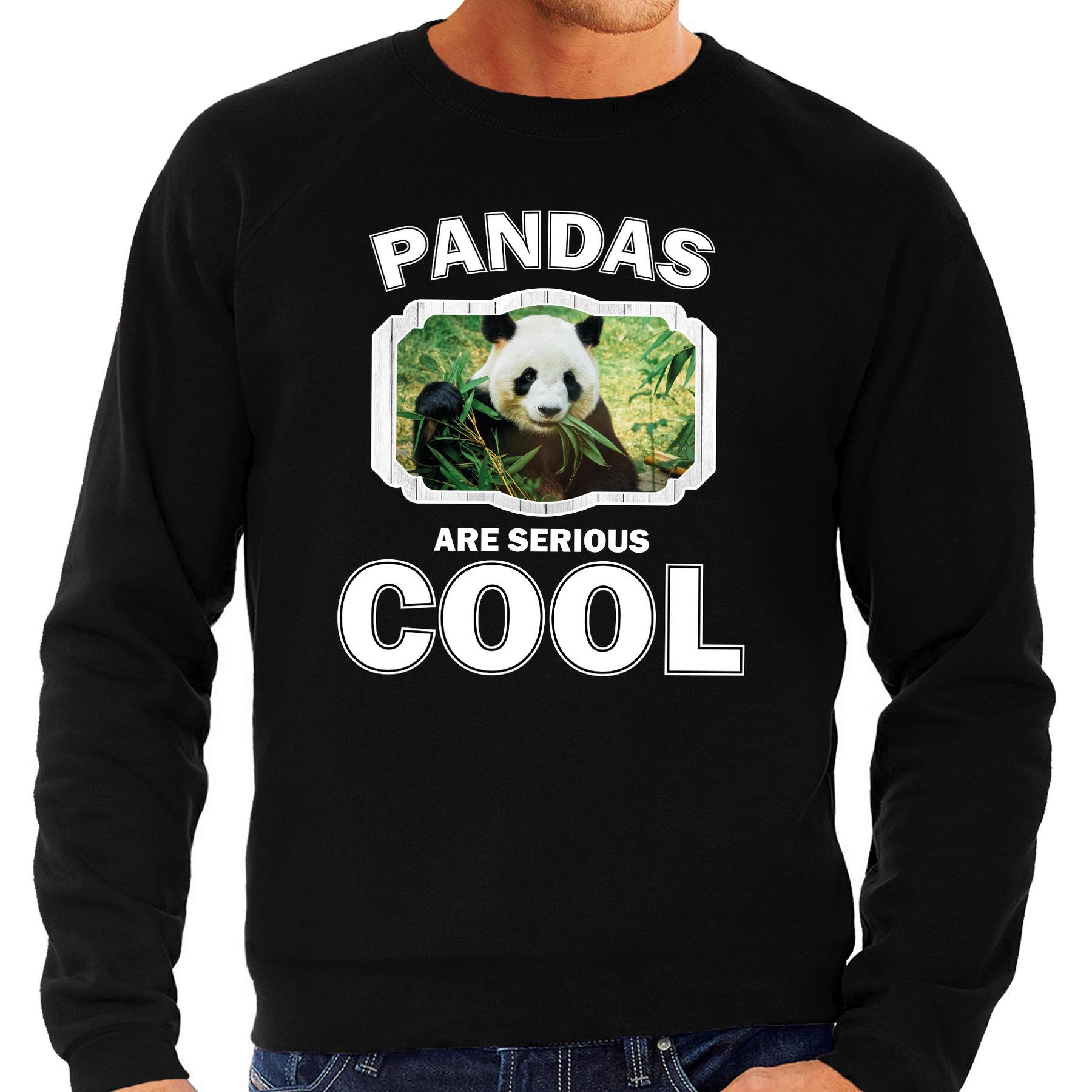 Sweater pandas are serious cool zwart heren - pandaberen/ panda trui